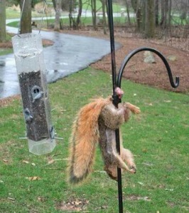 ballsstucksquirrel