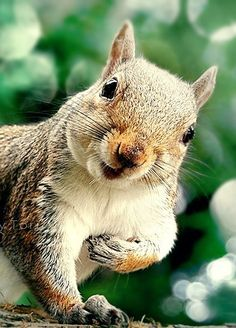 whomesquirrel